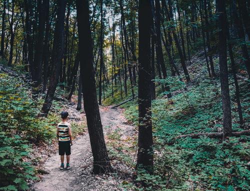 7 excursiones por la naturaleza cerca de Zaragoza para ir con niños