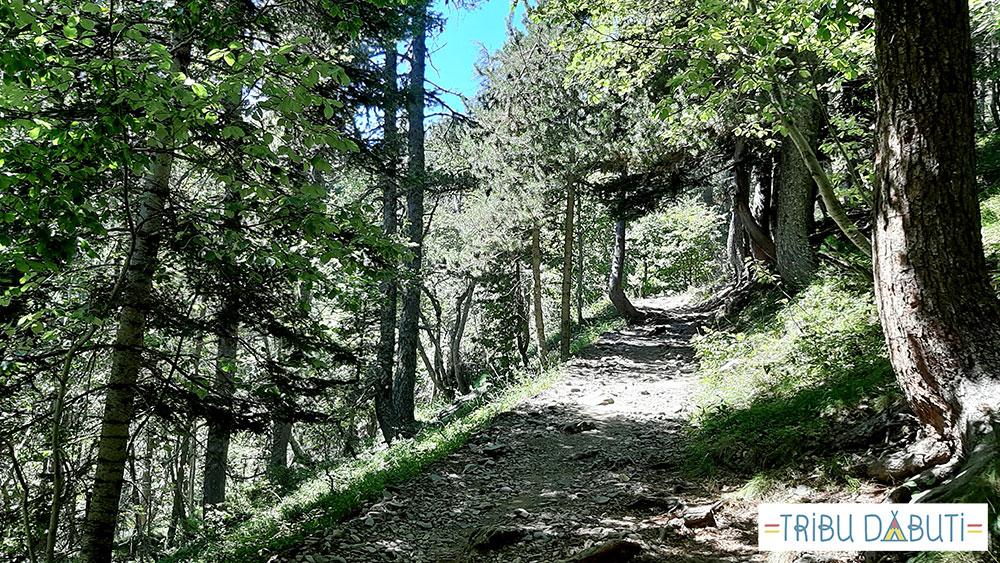 Bosque en el valle de Estós hasta el ibón de Escarpinosa